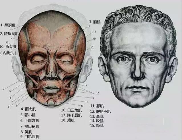 很多同学在平时画素描头像的过程中不管是临摹还是写生,经常会出现人物形象特征扑捉不明确、画的不像。出现把人物画得千篇一律,公式化、概念化。通过多学习优秀的素描人像作品,训练中仔细观察对象,把握好人物形象特征、掌握头部的基本结构、注重对人物内在性格和情绪的刻画,并贯穿学习的始终,才会获得扎实的素描造型能力,画出好的作品。