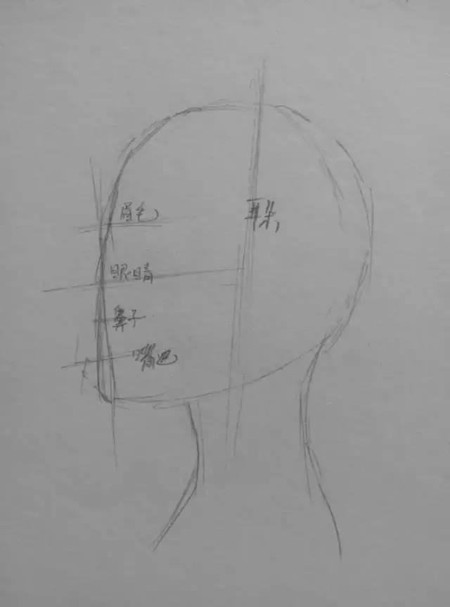 耳朵位于人物头部中线靠后的位置.