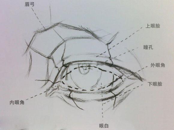 素描眼睛的画法之素描眼睛结构解析图文步骤