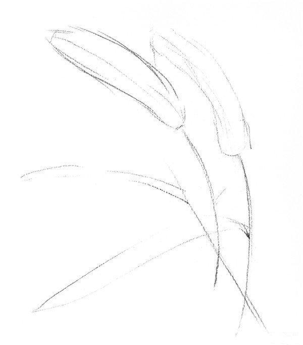 素描狗尾巴草怎么画?狗尾巴草的造型比较简单,适合初学素描的朋友进行素描画练习。今天为大家分享的素描教程就是要教大家画狗尾巴草,感兴趣的朋友一起来学习一下。   狗尾巴草是生活中非常常见的,毛绒绒很像狗尾巴所以叫狗尾巴草。狗尾巴草的颜色就是绿色的,枯萎了的画就会变成枯黄色。如果没见过狗尾巴草的小伙伴可以参考一下下面的图片,这样就知道狗尾巴草是什么样的了。    素描画狗尾巴草步骤:   第一步:观察素描狗尾巴草成图,待会我们要临摹的就是下面这张素描画。可以自己用铅笔测量一下狗尾巴草的茎叶比例。    第