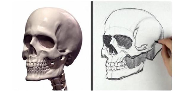 人物头部骨骼结构的素描画怎么画?人物头部骨骼结构的素描也是经常在素描画中会见到的素描画基础练习,今天的素描教程里面包含了具体的人物头部骨骼具体的画法,一起来进入今天的素描程中吧。   人物头部骨骼结构原型:    通过观察人物头部骨骼结构我们可以大致的总结出一些具体的素描画法技巧,首先观察,可以看出这次的头部骨骼原型反光效果明显,黑白灰的划分细致,立体感和细节感也比较的强,虽然是基础的练习但是对画者的技巧还是有一定的要求的,需要准备的素描画工具:素描纸、素描铅笔(不同的型号)、素描专用橡皮擦等。