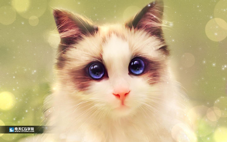 相片转手绘-cat